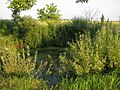 Старый пруд - panoramio (1).jpg