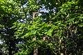Терлецкий лесопарк. Дубрава.jpg