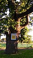 Хейлівщинський дуб.jpg