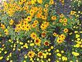 Цветы (Мелитополь).jpg