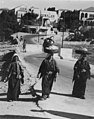 שיח גרח 1937 - iדגניi btm11707.jpeg