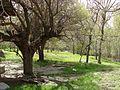 تویسرکان - روستای دورودان - panoramio.jpg