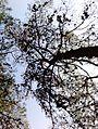 میوه های اسمانی - panoramio.jpg