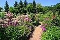 ロイズ ローズガーデン(Royce' Confect Rose Garden) - panoramio (1).jpg