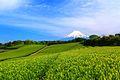 今宮の茶畑 - panoramio.jpg