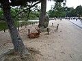 東大寺の鹿 - panoramio.jpg