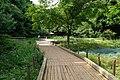 東高根森林公園 - panoramio (16).jpg