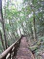 铜铃山森林公园的木栈道 - panoramio.jpg