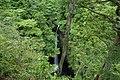 雨滝 - panoramio.jpg