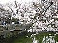 鹿沼公園の桜 - panoramio.jpg