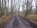 -2021-01-01 Woodland footpath, Felbrigg Park, Norfolk.JPG