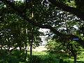 07159jfQuirino Highway Hall Lands San Josefvf 23.JPG