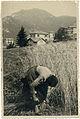 076 Mietitura del grano - donna.jpg