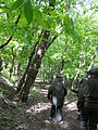 096 Walking down an old roadbed.JPG