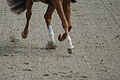 13-04-21-Horses-and-Dreams-Fabienne-Lütkemeier (21 von 30).jpg