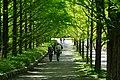 140517 Kobe Municipal Arboretum Japan05s3.jpg