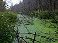171a 365 - Green Pond (4985235160).jpg