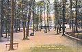 1910 Central Park Tree Grove.jpg