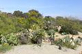1935 (Old) Cactus Garden 3.JPG