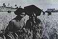 1954年,泰安县徂徕公社许家庄生产大队社员在选种.jpg