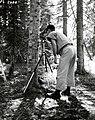 1958. Forest entomologist Paul E. Buffam making population counts of Chermes (Balsam woolly adelgid). Microscope is held by a tripod. Willamette Pass, Oregon. (36691995450).jpg