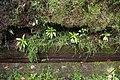 2012-10-26 13-12-19 Pentax JH (49282314126).jpg