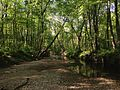2014-05-12 09 22 49 View down the Shabakunk Creek along the Ewing and Lawrence township line in New Jersey.JPG