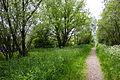 2015 05 24 Deutschland Baden-Württemberg Landkreis Sigmaringen Naturschutzgebiet Zielfinger Vogelsee (2).jpg
