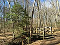 2016-03-01 12 52 41 American Holly next to a footbridge over an unnamed tributary of Little Difficult Run within Fred Crabtree Park in Reston, Fairfax County, Virginia.jpg