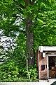 2016-05-21 ND 18 2 Linden Essen-Rellinghausen.jpg