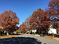 2016-11-18 11 47 12 View north along Dairy Lou Drive at Dairy Lou Court in the Franklin Farm section of Oak Hill, Fairfax County, Virginia during autumn.jpg
