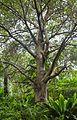 2016 Singapur, Ogrody botaniczne (242).jpg