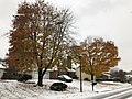 2018-11-15 09 02 45 A snow and sleet covered Sugar Maple and Red Maple along Kinross Circle between Kinbrace Road and Stone Heather Drive in the Chantilly Highlands section of Oak Hill, Fairfax County, Virginia.jpg