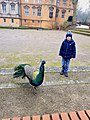 2020-12-12-Hike-to-Rheydt-Palace-and-its-surroundings.-Foto-15.jpg