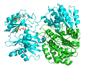 Succinate—CoA ligase (GDP-forming) - Image: 2fp 4