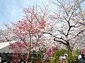 3 Chome-4 Ōta, Iwatsuki-ku, Saitama-shi, Saitama-ken 339-0052, Japan - panoramio (1).jpg