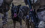 3rd Law Enforcement Battalion fast ropes with their K-9's 151008-M-xx145-089.jpg