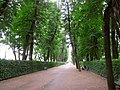 5620. St. Petersburg. Summer Garden.jpg