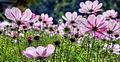 5glow flower6d (8219194188).jpg