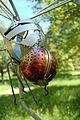 69 - Courting Dragonflies, Steve Blaylock (4655872426).jpg