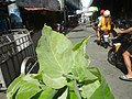 9766Ornamental plants in the Philippines 56.jpg