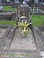 AU-Qld-Kedron-Lutwyche-Cemetery-George WITTON grave-2021.jpg