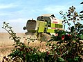 A Combined Harvester At Work - geograph.org.uk - 210563.jpg
