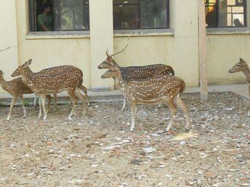 A Group of Deers.jpg