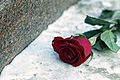 A Rose on the Pushkin monument.jpg