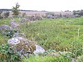 A Stone Circle at Moyness - geograph.org.uk - 579692.jpg