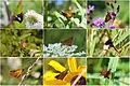 A Year In Skippers (Hesperiidae) (15261043253).jpg