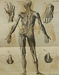 A compendious system of anatomy - in six parts ...; illustrated with twelve large copperplates (1792) (14776537211).jpg