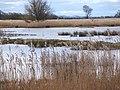 A corner of Leighton Moss RSPB Reserve. - geograph.org.uk - 1236251.jpg