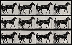 A horse drawing a chariot and driver. Photogravure after Ead Wellcome V0048734.jpg